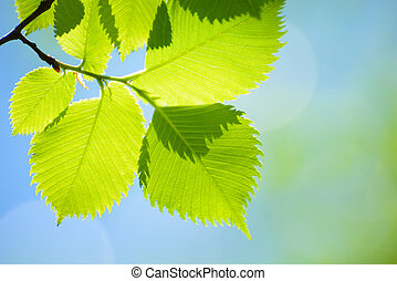 Fresh Spring Green Leaves Over Bright Background