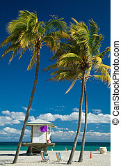 Lifeguard cabin on Miami beach with palm trees in...