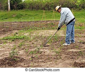 garden preperation - senior man prepares a garden for...
