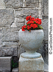 Geranium - Red geranium in cement urn