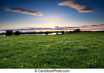 sunset over Ijssel river and wildflowers on meadow,...
