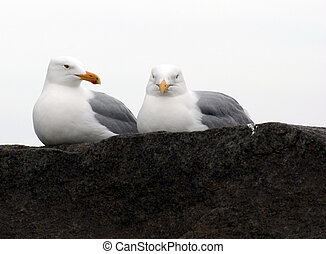 Do i know You - two gulls sit on a stone at ashore ocean