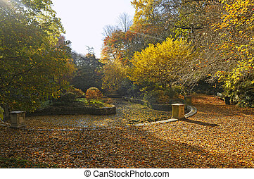 autumnal colors in park with small pool