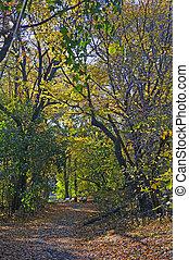 Dreamland: Alley in fantasy park - Beautiful quiet park,...