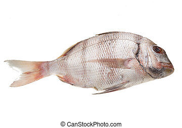 Raw porgy