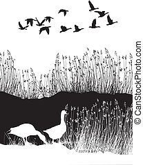 Background with reeds and wild gees - illustration black and...