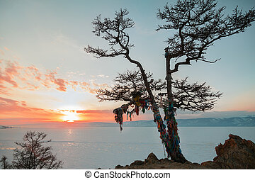 Shaman tree of lake Baikal