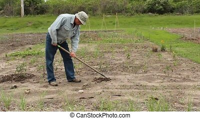hand cultivator - man weeding his garden with a hand...