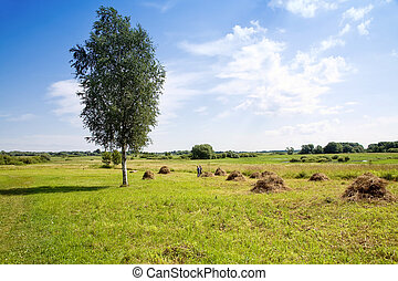 Haymaking - Summer landscape A hay is in the field