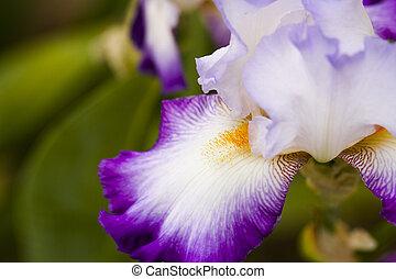 Flowers - Garden in full bloom on sunny summer day