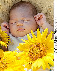 Newborn baby sleeps among big sunflowers