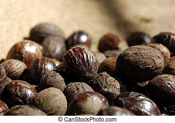 nutmeg - close up image of nutmeg from a factory in Grenada