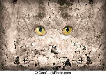 Eye Wall - Old cracked stone wall with cat eyes