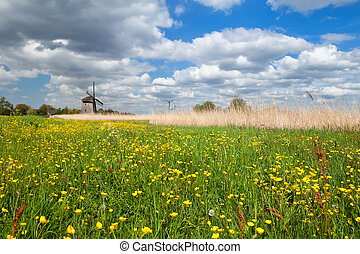 yellow wildflowers and windmill