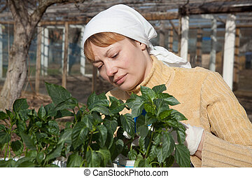 Gardening, planting concept - woman with seedlings in the...
