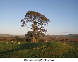 English Autumn Oak - picture of a Scottish landscape