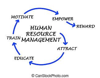 dirección, recurso, humano