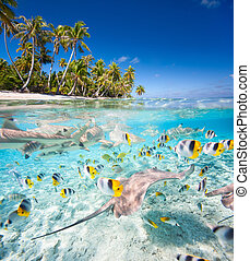 Tropical island under and above water - Beautiful tropical...