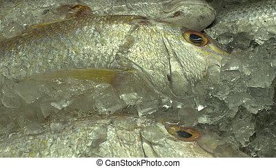seafood - fresh fish - snapper on ice - Lutjanus species...