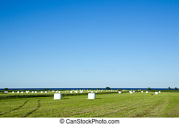 Field of haybales - Wrapped haybales in a field by the coast...