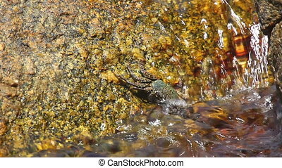 Crab - Small crab on a rock.