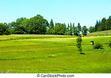 Beautiful green meadows in landscape