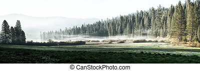 Misty morning in Yosemite