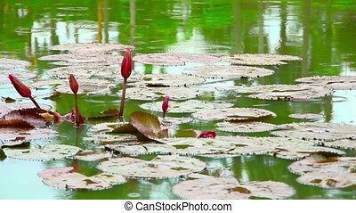flowers on pond in park during rain