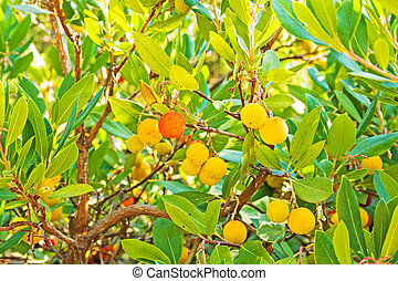 Arbutus, red, yellow fruits and green leafs