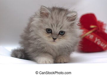 cute kitty with heart