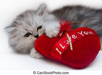 kitten holding a heart