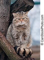 Wild cat Felis silvestris on tree