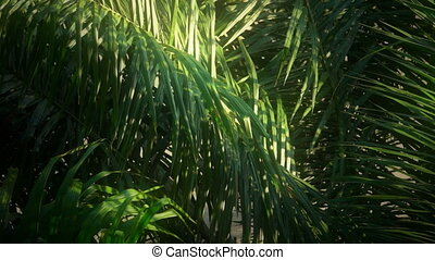 Jungle Early Morning Light - Early morning light in the...