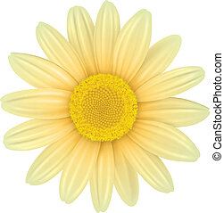 Flower isolated, vector illustration.