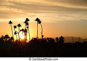 atardecer precioso con plantas - atardecer preciosos con...