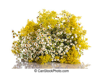 Summer bouquet of wild flowers on a white background