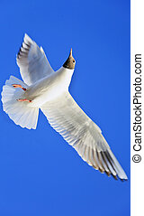 Vertical Takeoff - Vertical color portrait of a lone seagull...