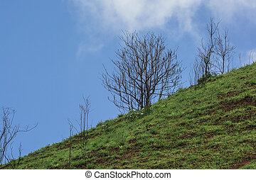 The Dead tree on the mountain of grass - Beautiful summer...