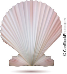 Scallop seashell isolated on white background. Vector...