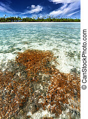 tropical coral reef in a beautiful lagoon