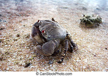 close up of a sand crab in the seashore