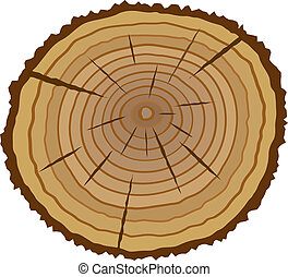 Cross section of tree, vector illustration