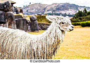 vista, Sacsayhuaman, pared, Cuzco, perú