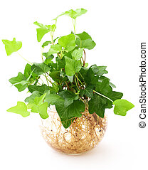 potted plant isolated on white background
