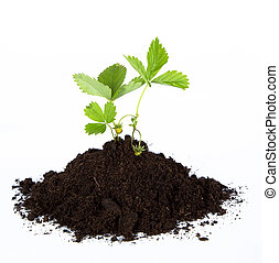 heap dirt with a green plant - Heap dirt with a green plant...