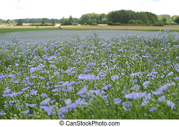 Meadow with blooming flax