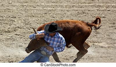 Steer Wrestling Bull Dogging - A cowboy bull dogger wrestles...