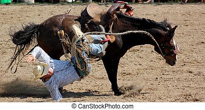 Saddle Bronc Riding - A cowboy is thrown from a bucking...