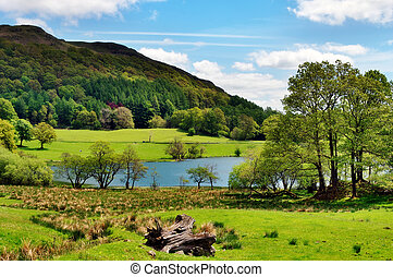 Scenic view of Loughrigg Tarn - Tranquil view of trees by...