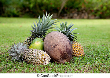 Tropical Fruit - Tropical fruit on green grass